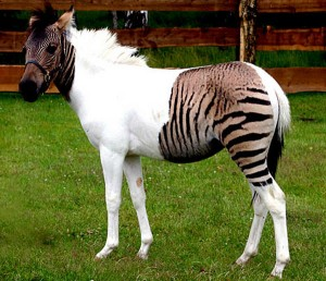"""I say it's a zebra, and I say the hell with it."""
