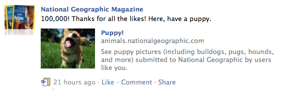 NGM Facebook Likes Have a puppy