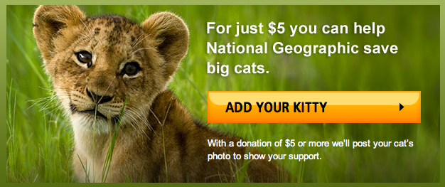 NGS Little Kitties Big Cats donate