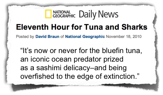 NG News bluefin tuna eleventh hour